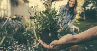 Le buone idee del 29 maggio: adottare un albero