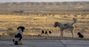 Cani per strada