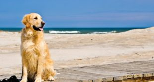 Spiagge Animal Friendly