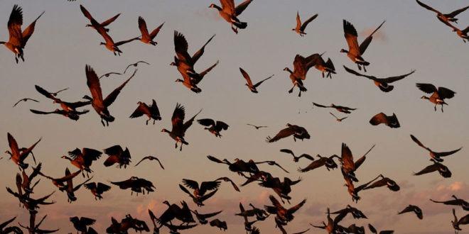 uccelli scienza