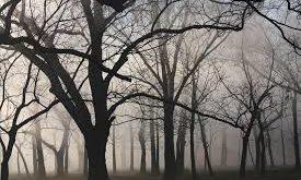bosco dei crimini