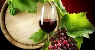 milis 31 vini novelli