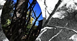 albero degli specchi