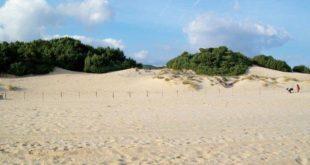 dune chia