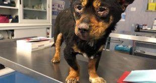 cane torturato
