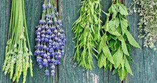 serramanna erbe