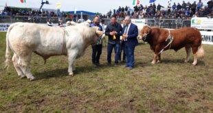 mostra bovini