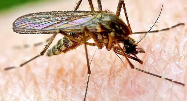lotta zanzare