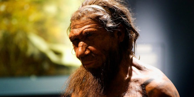 estinzione neanderthal