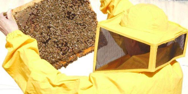 api confagricoltura