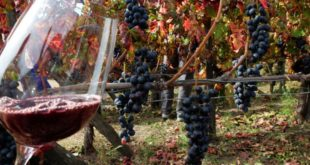 racconti sul vino