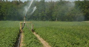 Immagine di un terreno coltivato
