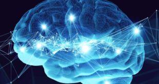 neuroni e cervello