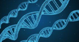 genoma corona virus