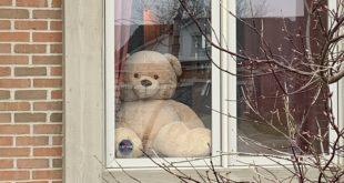 orsacchiotto in finestra
