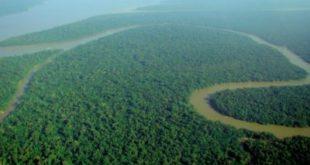 Una vista delle foreste pluviali in Amazzonia