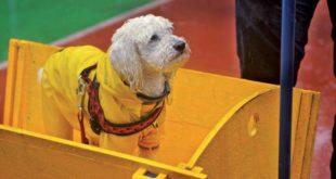 Cane che viene addestrato