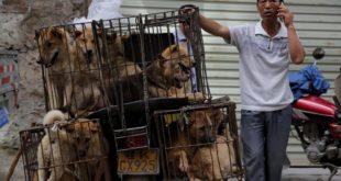 Mercato Yulin in Cina