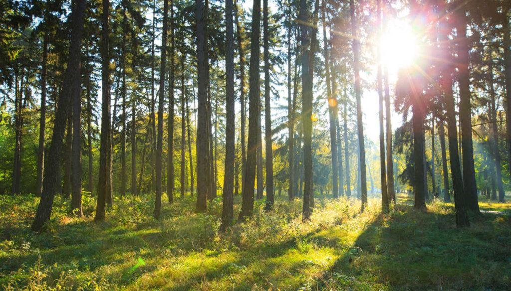 Grazie all'App Forest, sarà possibile contribuire a piantare degli alberi reali