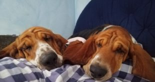 Animali domestici, cani a casa