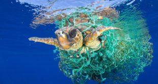 tartaruga nella rete
