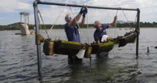 Pesca progetto Ostrinnova
