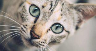 lav, campagna sterilizzazione colonie feline Oristanese