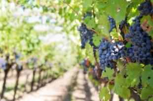 Coldiretti: fronte comune contro norma europea sull'etichetta dei vini