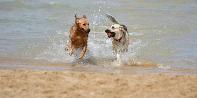 Tortolì, riaperta dog beach