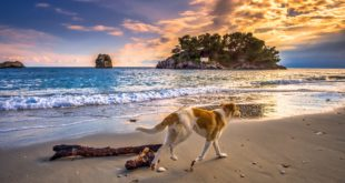 spiagge libere cani