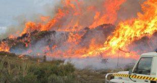 Incendi: petizione, piantare 100 milioni di alberi in 5 anni
