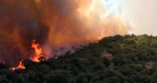 Incendi, 34589 interventi dei vigili del fuoco dal 15 giugno