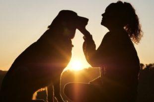 26 agosto. Giornata internazionale del cane