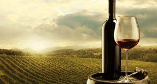 Vino Made in Italy, Coldiretti: Sarà un'annata di buona qualità