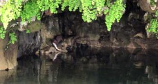 Avvistato esemplare di visone americano in centro Sardegna
