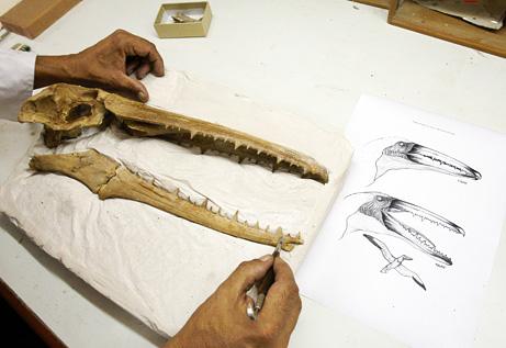 Fino a 40 milioni di anni fa sui mari dell'Antartide volavano famelici uccelli con aperture alari enormi