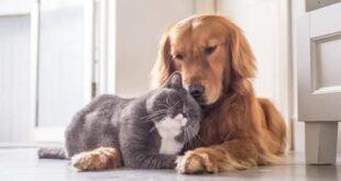 Animali domestici, quali sono e quanto ci costano