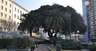 "Wwf: Antonio Durzu nominato ""custode dell'albero"""