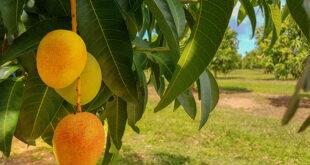 Premio Banco Sardegna. Coldiretti: frutti esotici