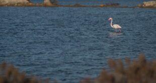 Lollas e pratzas: Capoterra svela le sue bellezze