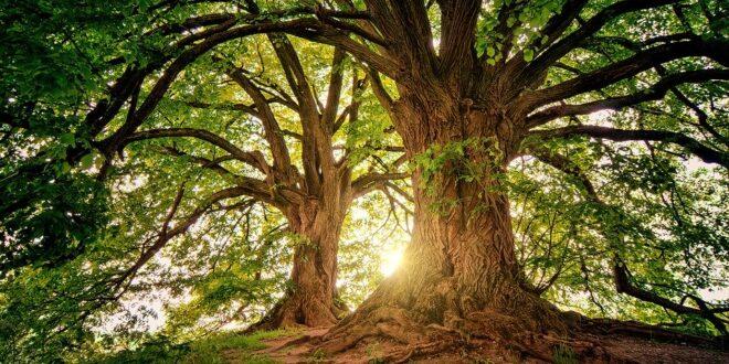 Giornata Nazionale degli alberi: 21 novembre