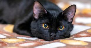 'Effetto gatto nero', ecco perché siamo superstiziosi