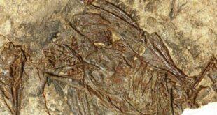 Fossile di uccello di 120 milioni di anni fa