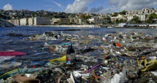 Alleanza delle cooperative pesca e WWF