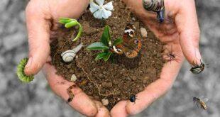 Per proteggere la biodiversità