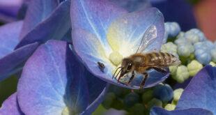 Perché i profumi dei fiori sono così diversi fra loro?