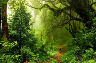 wwf alberi