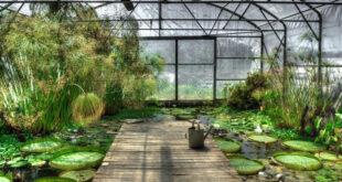 Fotosintesi artificiale per fermare il cambiamento climatico