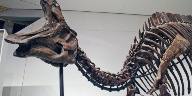Dinosauro Lambeosaurus