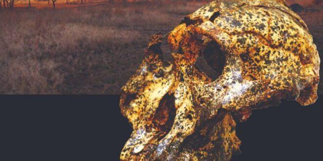 Rinvenuto un teschio di due milioni di anni fa